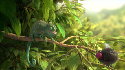 29590_Still_02_Our-Wonderful-Nature_The-Common-Chameleon